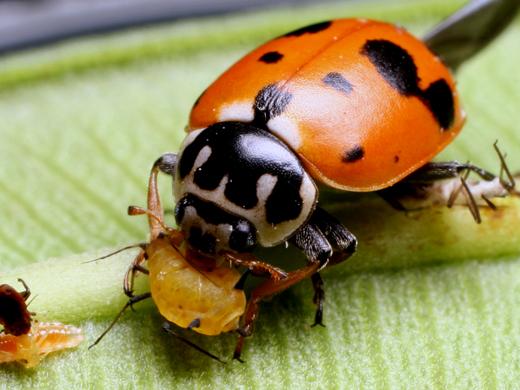 CONSEJOS PARA LA IMPLANTACIÓN DE MODELOS DE CONTROL BIOLÓGICO