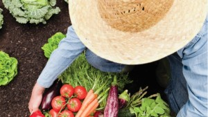 ENERGÍA, ENTROPÍA Y EXERGÍA: NUTRIR EN FUNCIÓN DEL TRABAJO EJERCIDO POR LA PLANTA