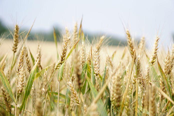 AGRICULTURA, TENDENCIA DE INVERSIONES EN EL MUNDO