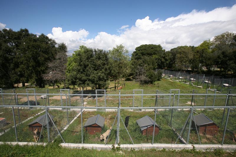 Proyecto de residencia canina y centro hípico en Canarias