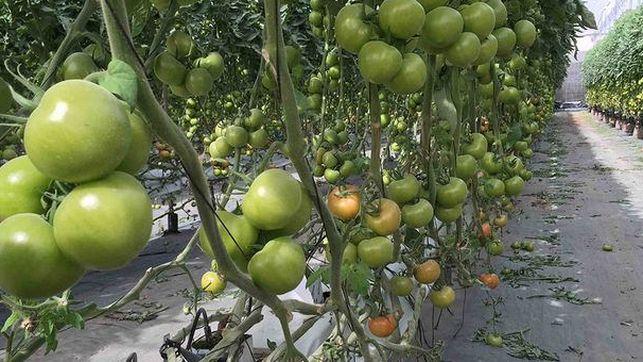 Coagrisan recibe un galardón por su gestión en los envases de fitosanitarios