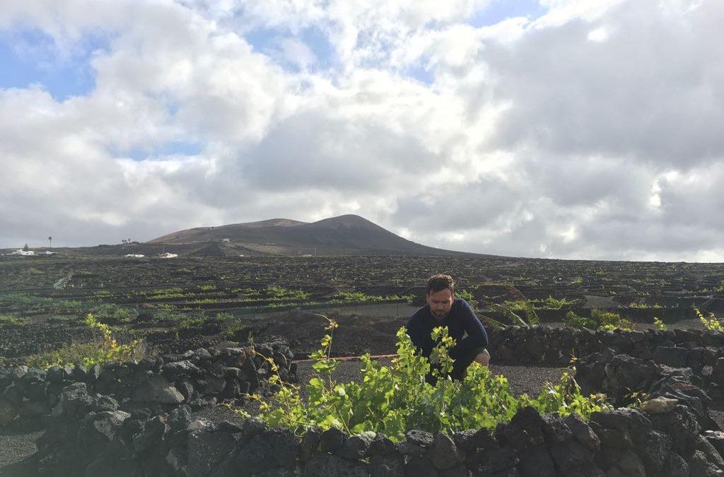 Ingeniería y asesoramiento agrícola en Canarias