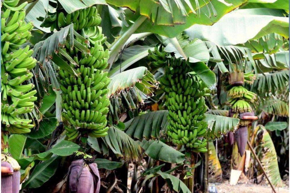 Asesoramiento agrícola y trámite de subvenciones