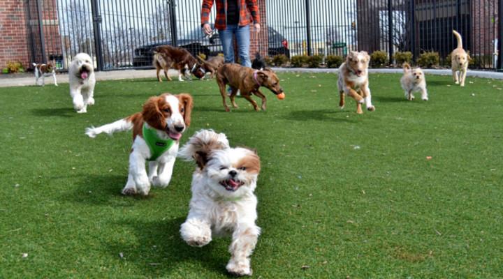 Ingeniería de proyectos de residencia canina y cómo conseguir clientes