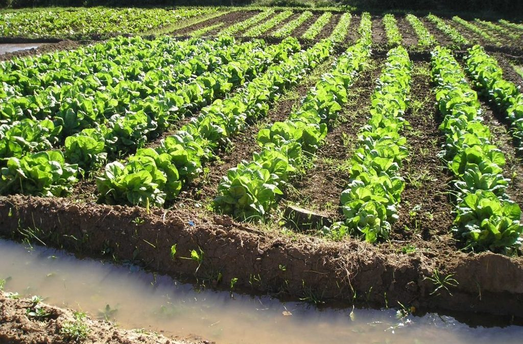 Agricultura ecológica como modelo en la prevención de enfermedades