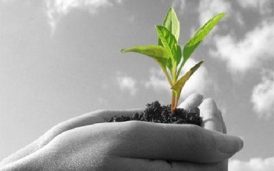 Agricultura sostenible en las Islas Canarias