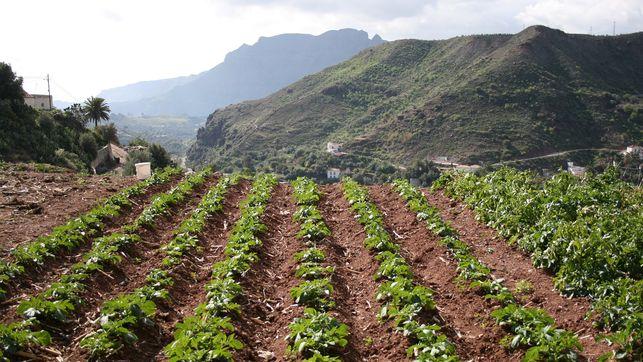 El Cabildo de Gran Canarias inicia plan de subvenciones para tierras abandonadas