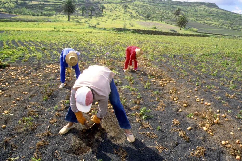 Informes de estado de explotaciones agrícolas