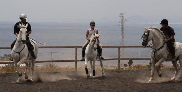 Proyecto técnico de cultivo de olivo y desarrollo de modelo de negocio: residencia canina e hípica en Canarias