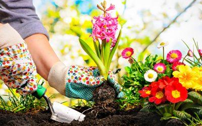 Asesoramiento en jardinería