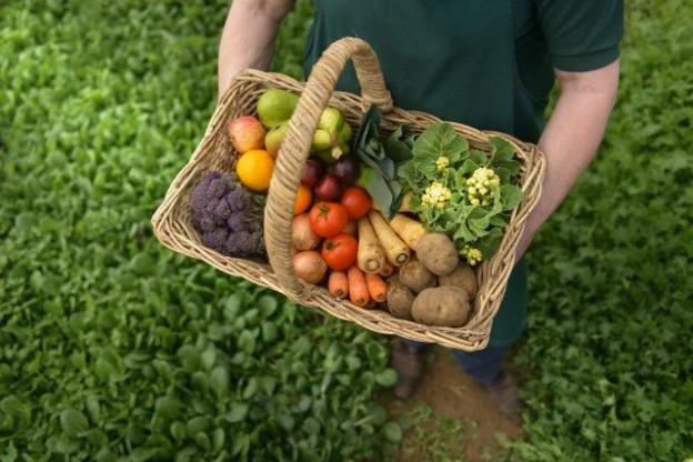 Control, certificación y fomento de la agricultura ecológica en Canarias