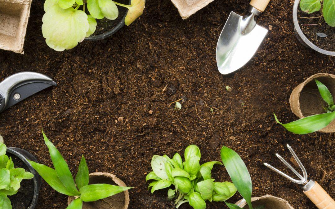 Descubre el mejor servicio Asesoramiento en Jardinería ¡en Canarias!