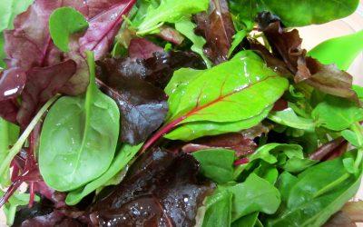 Cultivos de brotes Baby Leaf