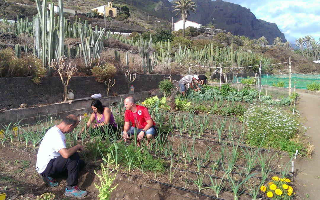 Mecanismos de control y certificación de la agricultura ecológica en Canarias