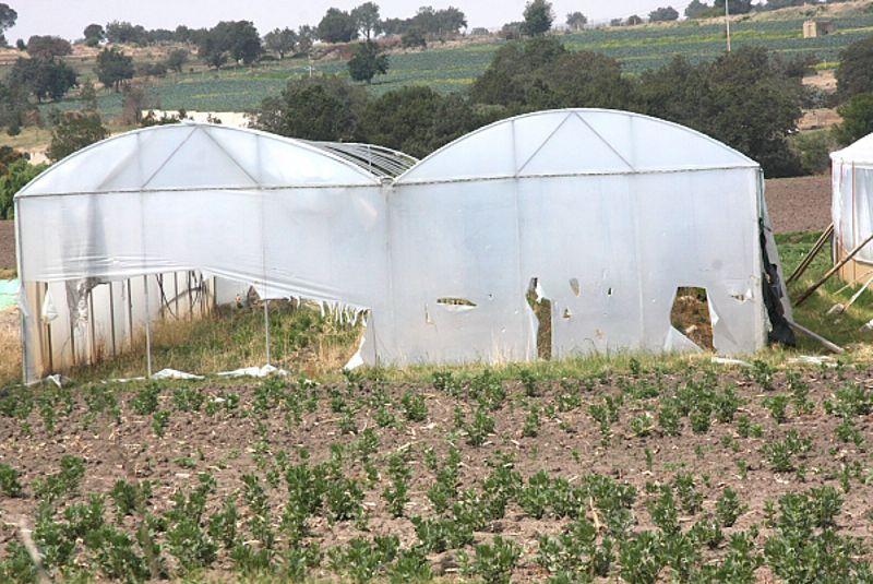 Peritaje de daños agrícolas en fincas e invernaderos