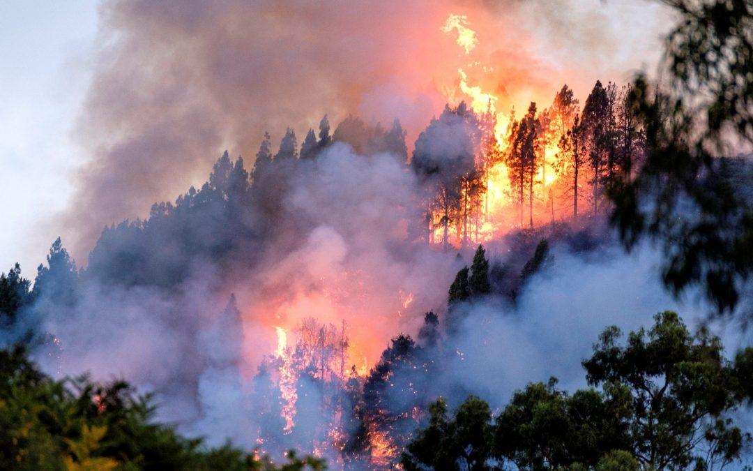 Peritaje de daños por incendio forestal