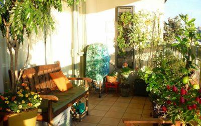 El huerto agrícola en Casa