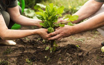Subvención agrícola para el apoyo a las inversiones en explotaciones agrícolas