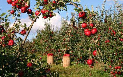 ¿Todavía no sabes cómo aprovechar el Agroturismo para diversificar tus ingresos?