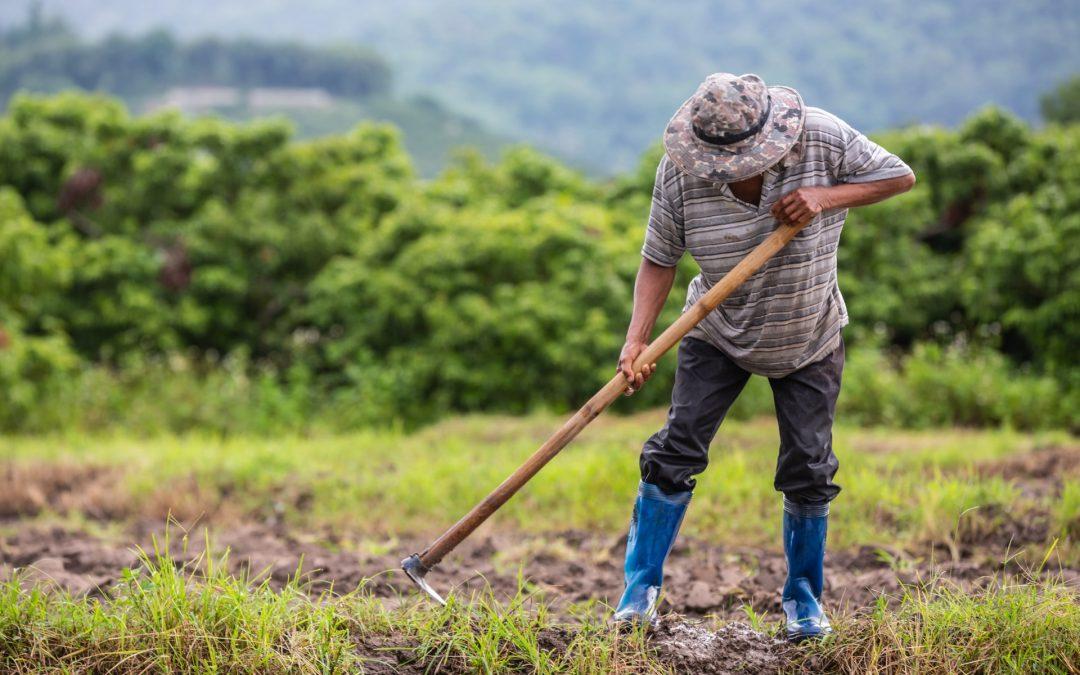 proyectos legalización estructuras agrícolas Canarias