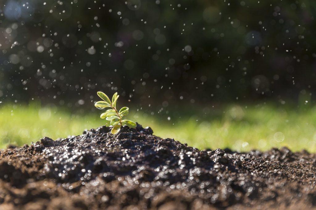 residuo cero agricultura
