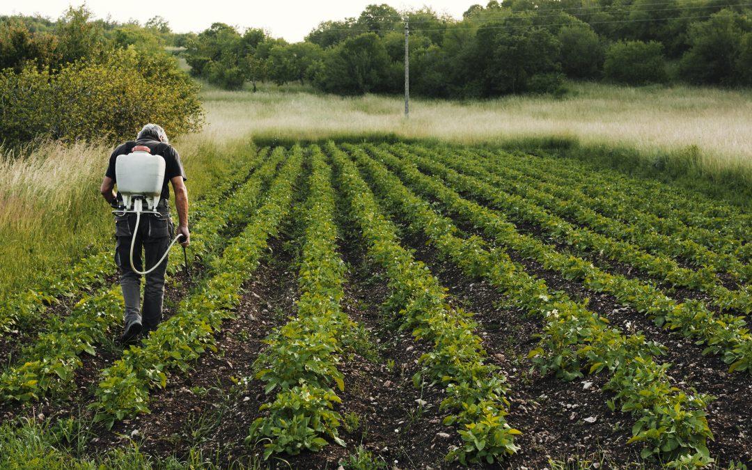 El sector primario no para, la agricultura en Canarias tampoco