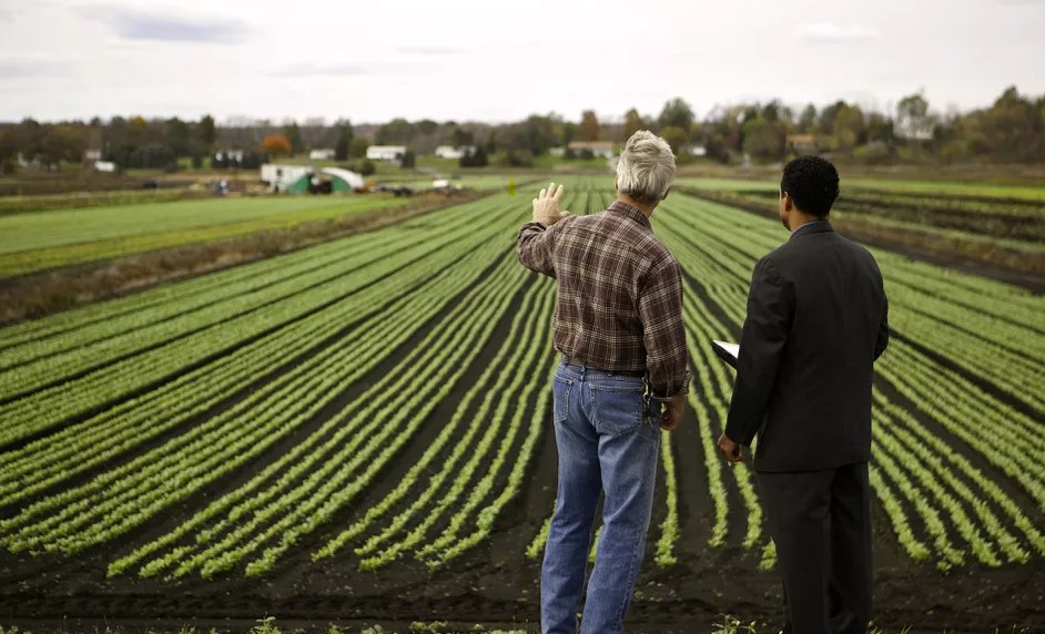negocio agrícola