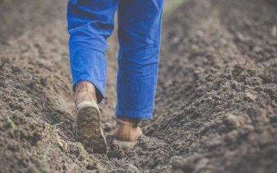 Impacto del COVID19 en la agricultura canaria