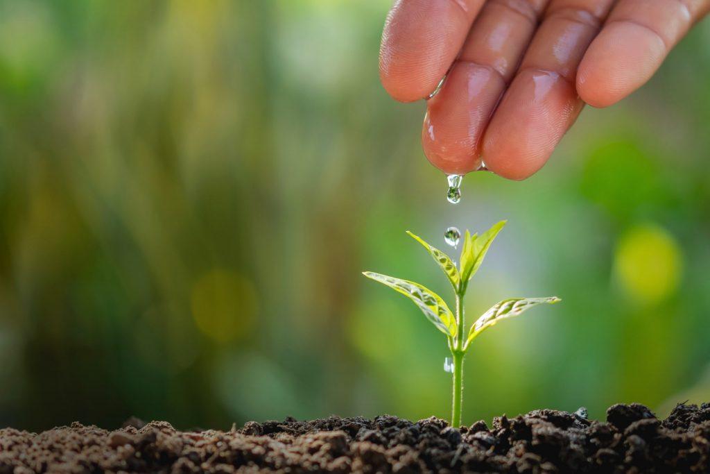 cuales son los usos del riego en agricultura