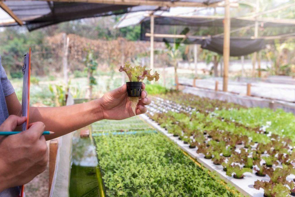 ¿Cuál es es la mejor manera de hacer un cultivo hidropónico?