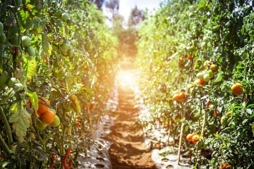 Ventajas de invertir en agricultura