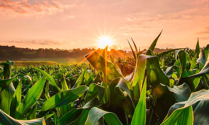 ¿Qué se necesita para el negocio de agricultura?