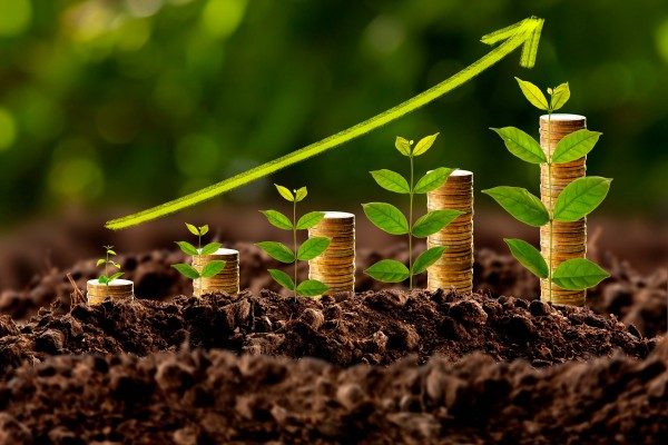 ¿Cuál es el negocio más rentable en el campo?