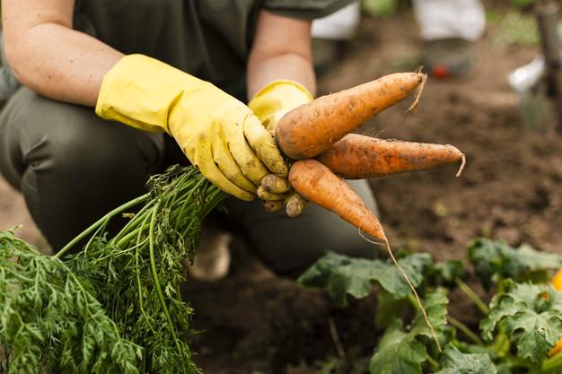 ¿Qué significa explotación agrícola?