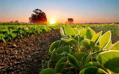 Trámites para crear una empresa agrícola