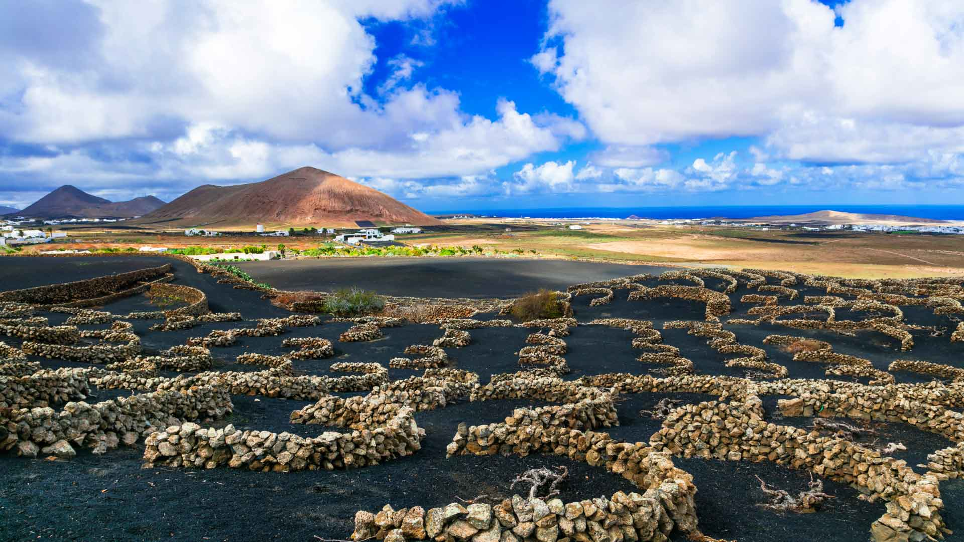 agricultura en Canarias - viñedos