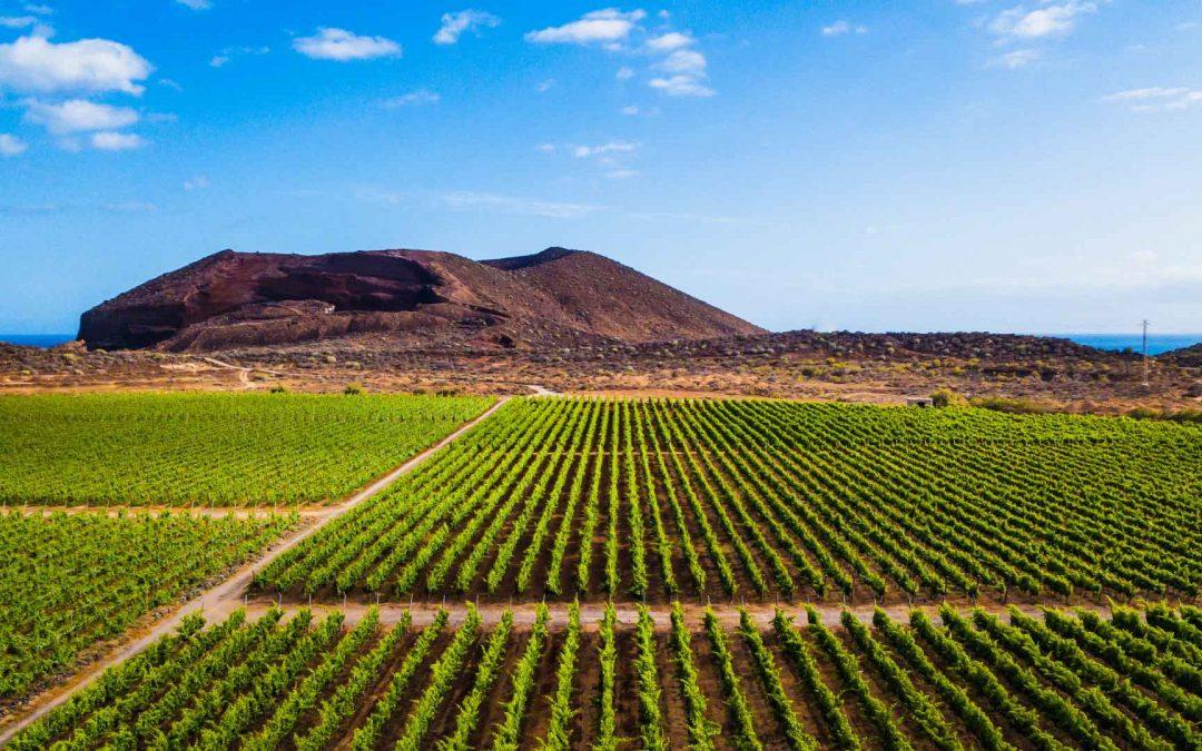 Factores que influyen en la agricultura de Canarias