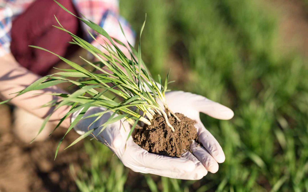¿En qué consiste la ingeniería agrícola?